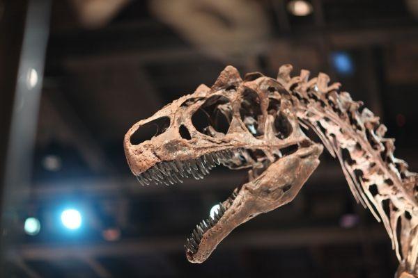 dinosaur-241962